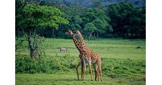 Tagesausflug Arusha National Park